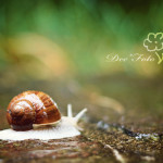 IMG_1194_klein