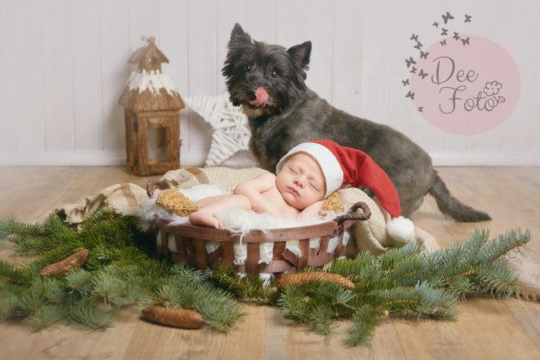 deefoto-fotografin-kinder-familie-baby-tiere-hunde-hochzeiten-bayern-amberg-neukirchen-sulzbach-rosenberg-hohenstadt-hersbruck-lauf7